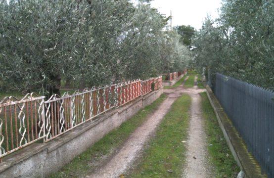 Villino con uliveto strada prov.le Terlizzi Mariotto, Terlizzi – (BA)